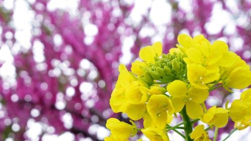 sarı, şeftali içeren Ücretsiz stok fotoğraf