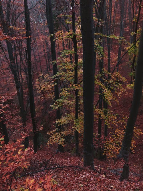 シーズン, トランクス, 乾いた葉, 屋外の無料の写真素材