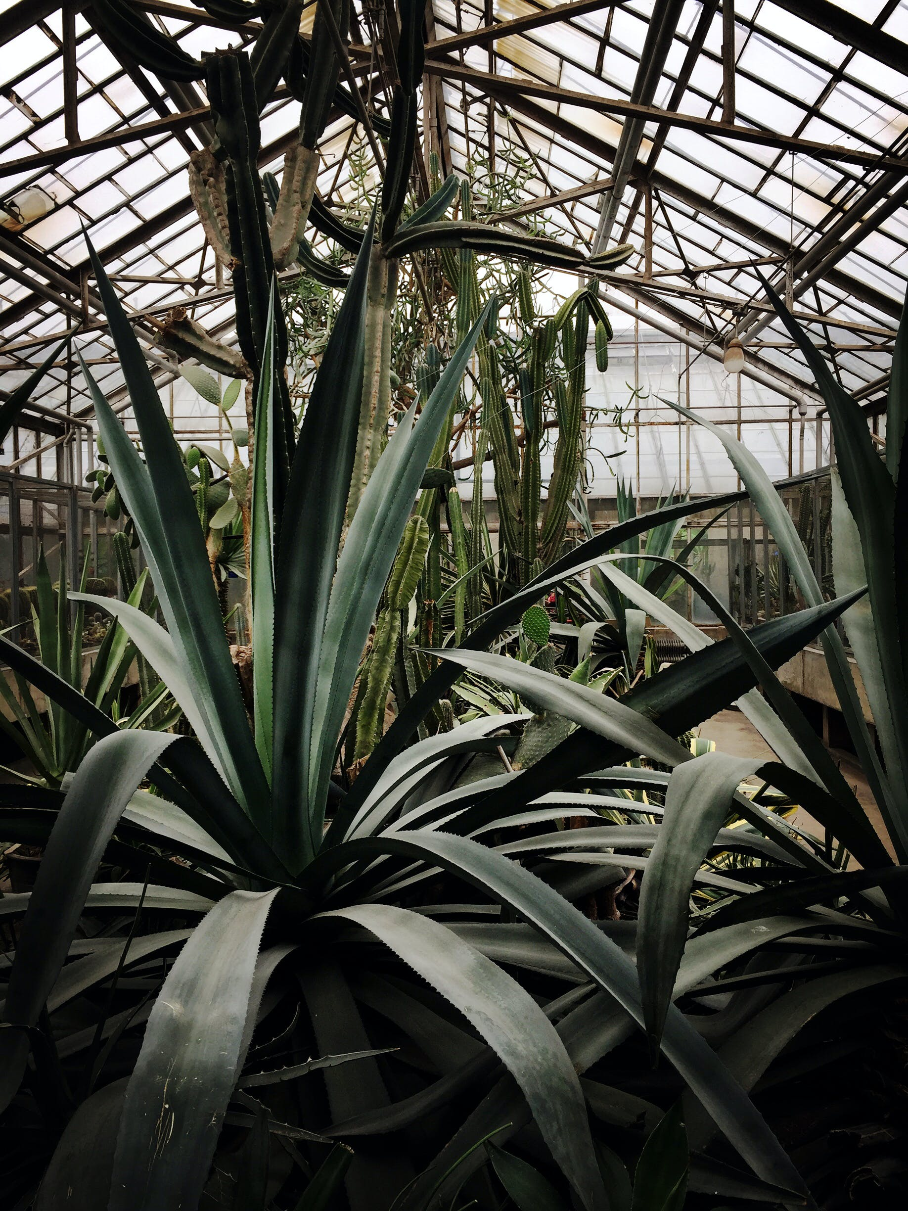Photo of Green Plants in Greenhouse
