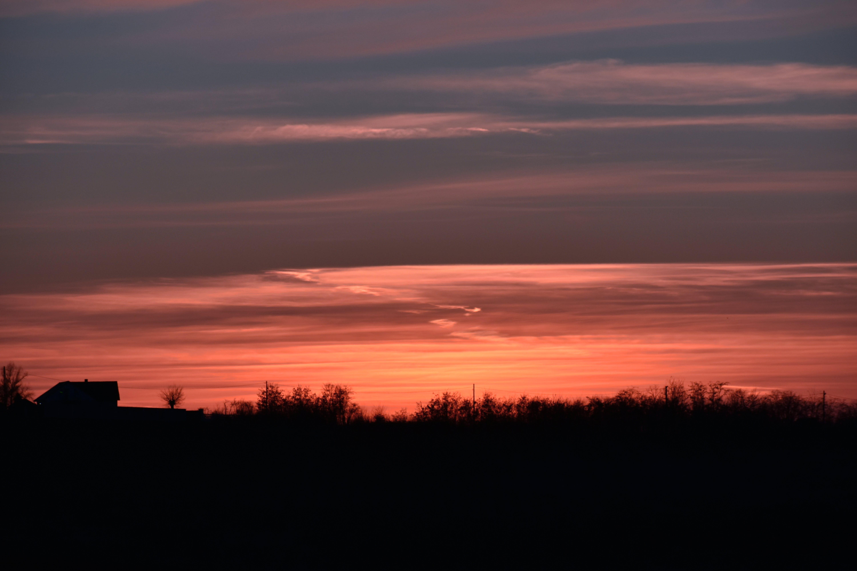 Безкоштовне стокове фото на тему «горизонт, дерева, золота година, навколишнє середовище»