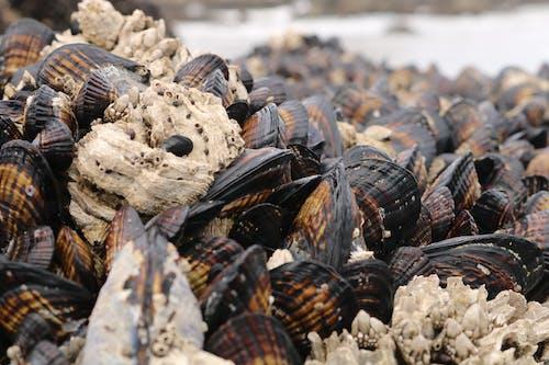 オレゴン州の海岸の無料の写真素材
