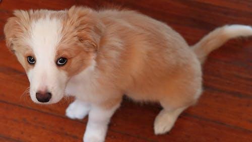 Základová fotografie zdarma na téma roztomilý, štěně, zlobivý