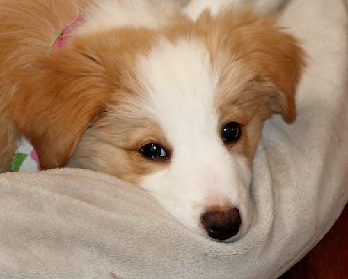 Základová fotografie zdarma na téma pes, postel, roztomilý, štěně