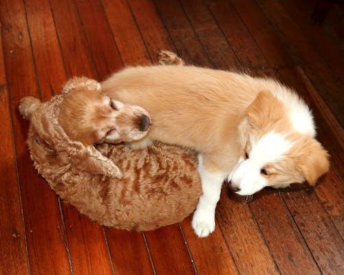 Základová fotografie zdarma na téma psi, roztomilý, spleť