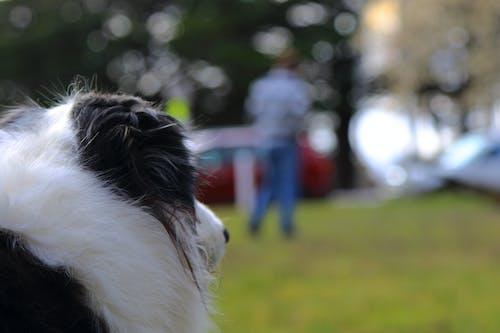 Základová fotografie zdarma na téma dívat se, pes, zaměřen