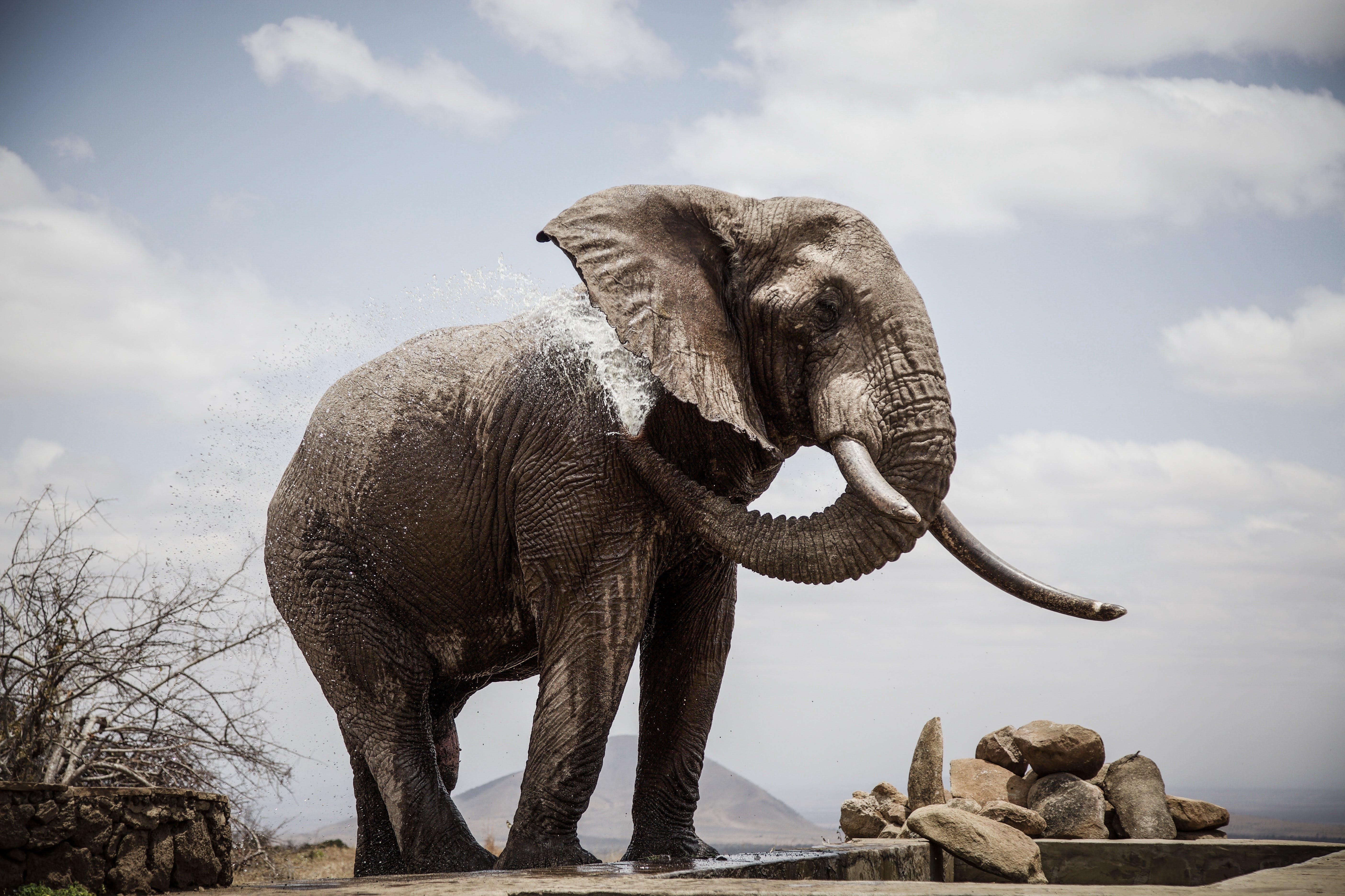 Elephant Standing Near Pile of Stones