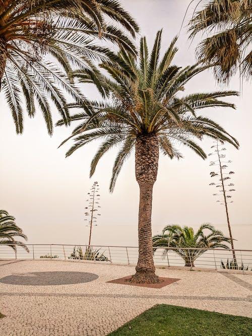Gratis stockfoto met mediterraans, palm, strand