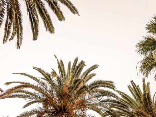 Free stock photo of negative space, palm, palm tree