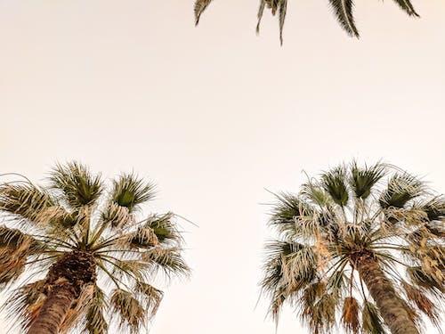Gratis stockfoto met negatieve ruimte, palm
