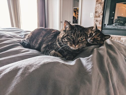 Free stock photo of bed, cats, fireplace
