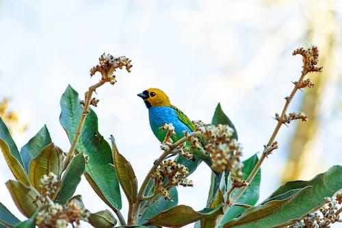 動物, 小, 棲息, 野生動物 的 免費圖庫相片