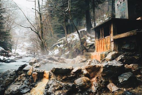 Fotos de stock gratuitas de agua, arboles, bosque, frío