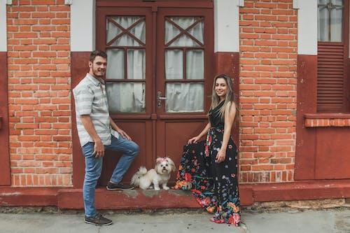 Fotos de stock gratuitas de al aire libre, calle, canino, casa
