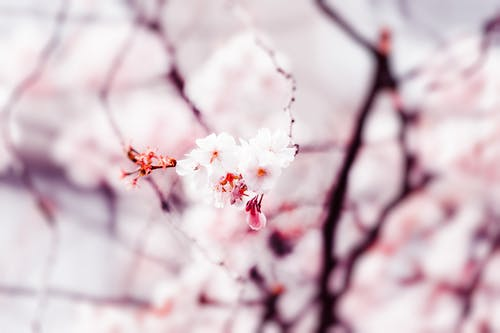 天性, 微妙, 植物群, 漂亮 的 免費圖庫相片