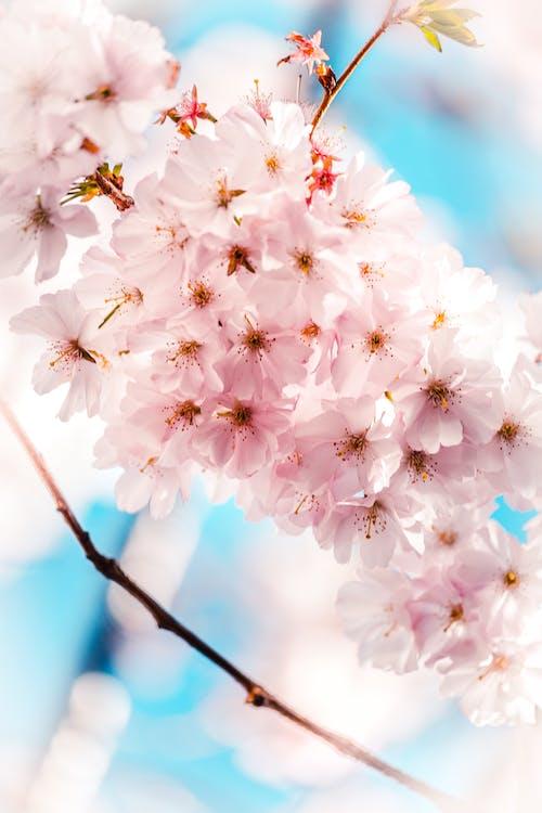 baggrund, blomster, blomstrende