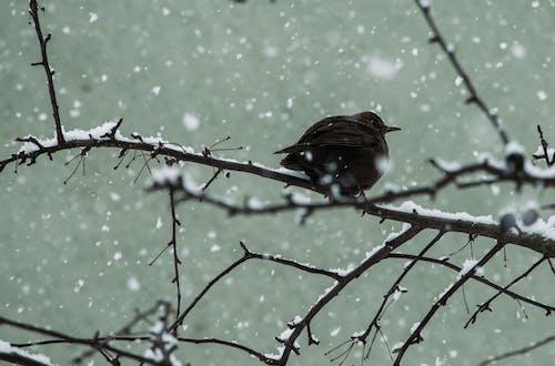 Brown Bird Standing on Branch