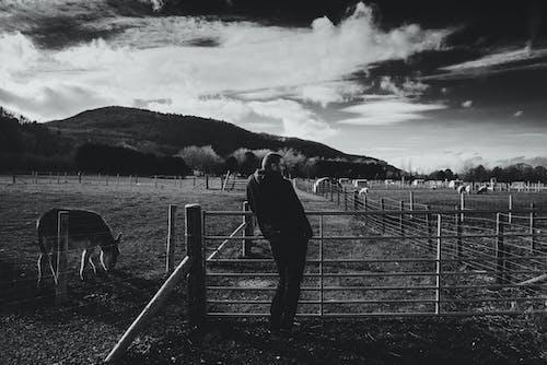 คลังภาพถ่ายฟรี ของ กั้นรั้ว, การทำฟาร์ม, ขาวดำ, คน