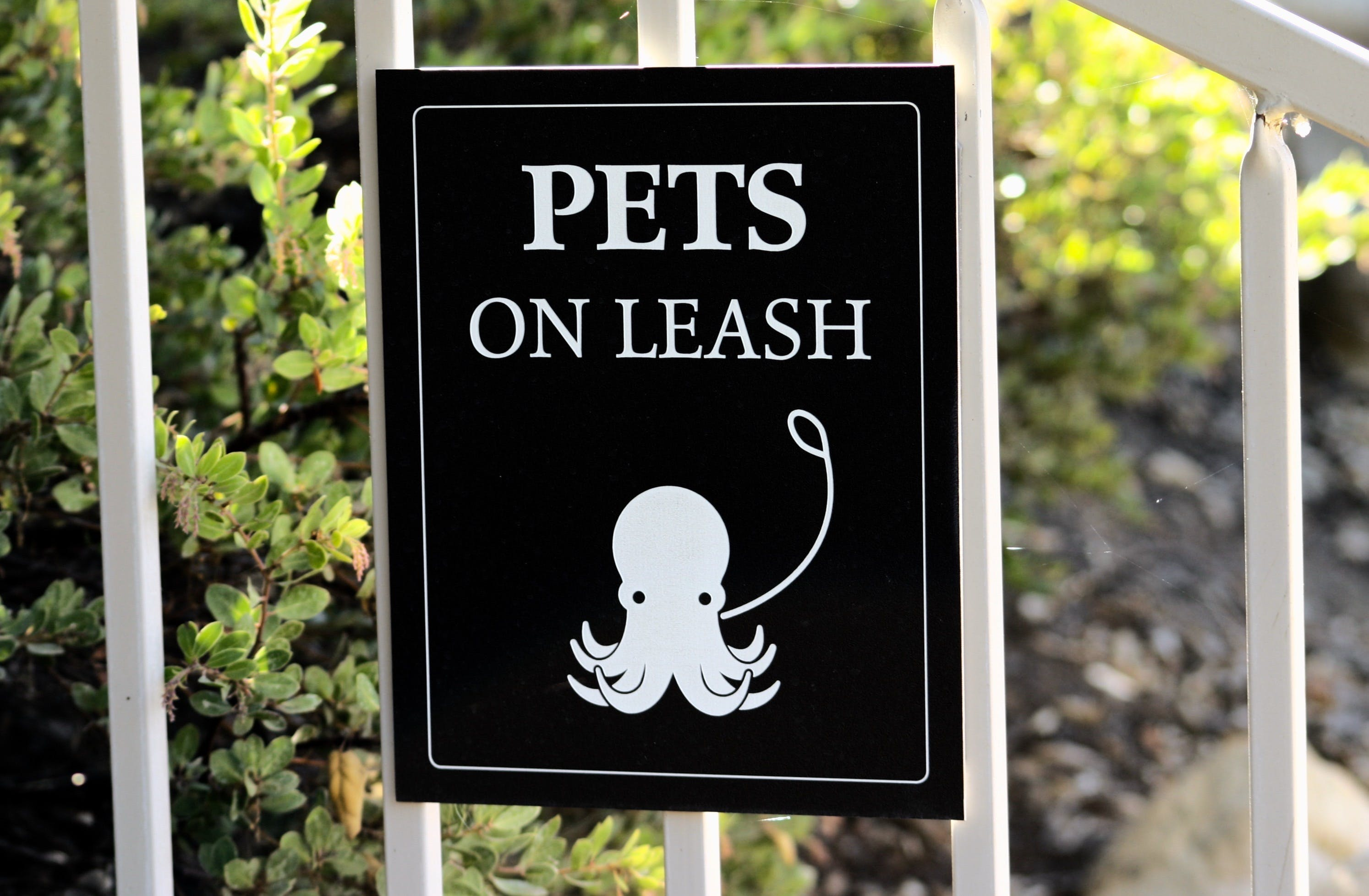 Free stock photo of leash, octopus, pets, sign