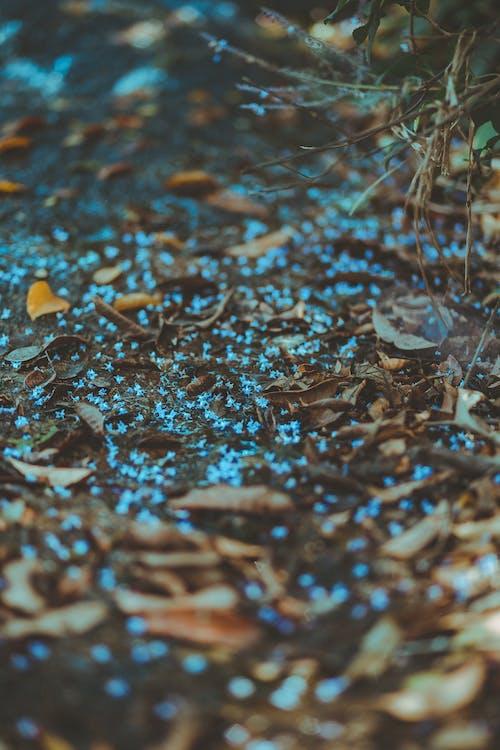 Ilmainen kuvapankkikuva tunnisteilla keskittyminen, kirkas, kuivat lehdet, multa