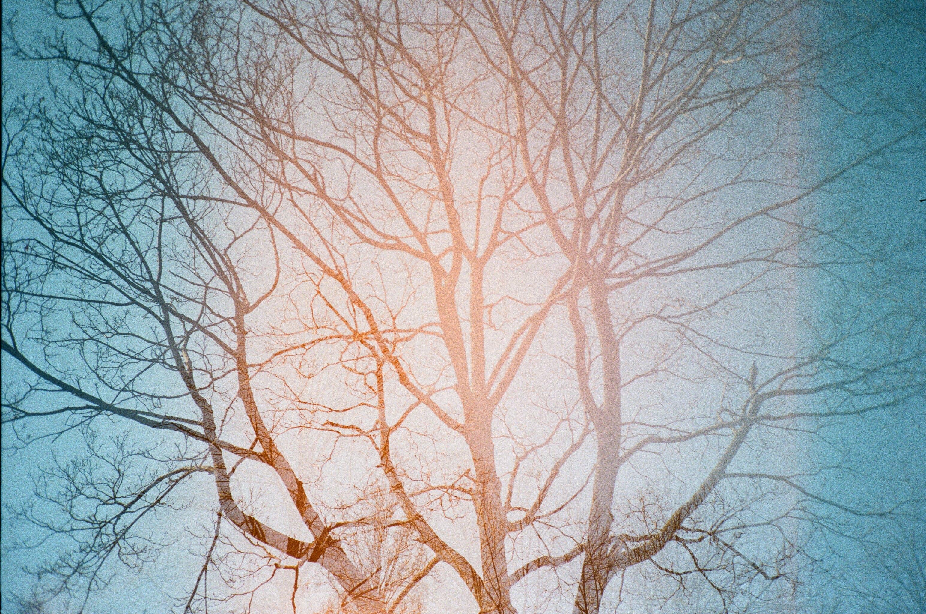 Безкоштовне стокове фото на тему «блакитне небо, гілки дерев, Денне світло, денний час»