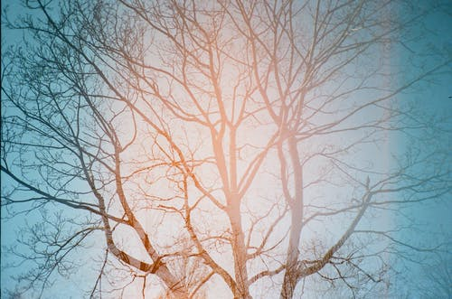 Fotos de stock gratuitas de árbol, cielo azul, colores, durante el día