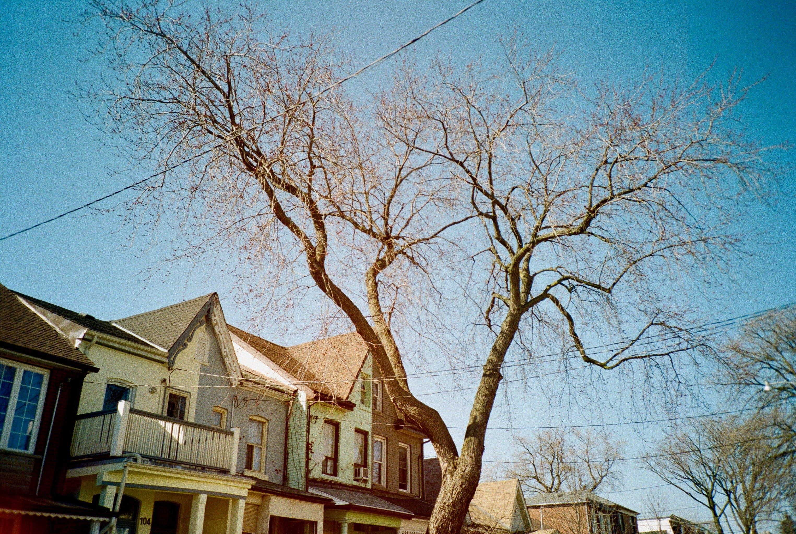 Ingyenes stockfotó birtok, csupasz fa, elülső, építészet témában