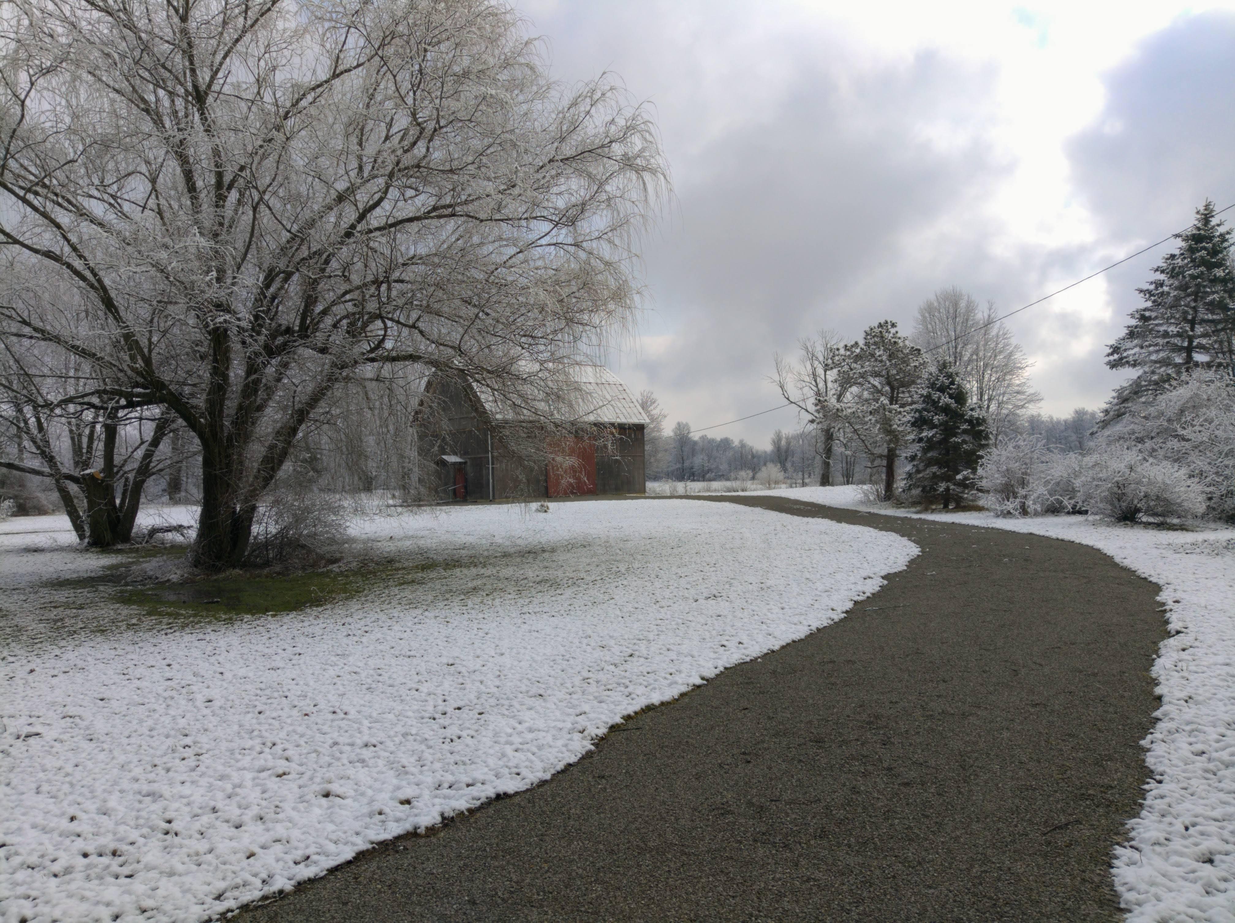 柳, 柳の木, 納屋, 雪の無料の写真素材
