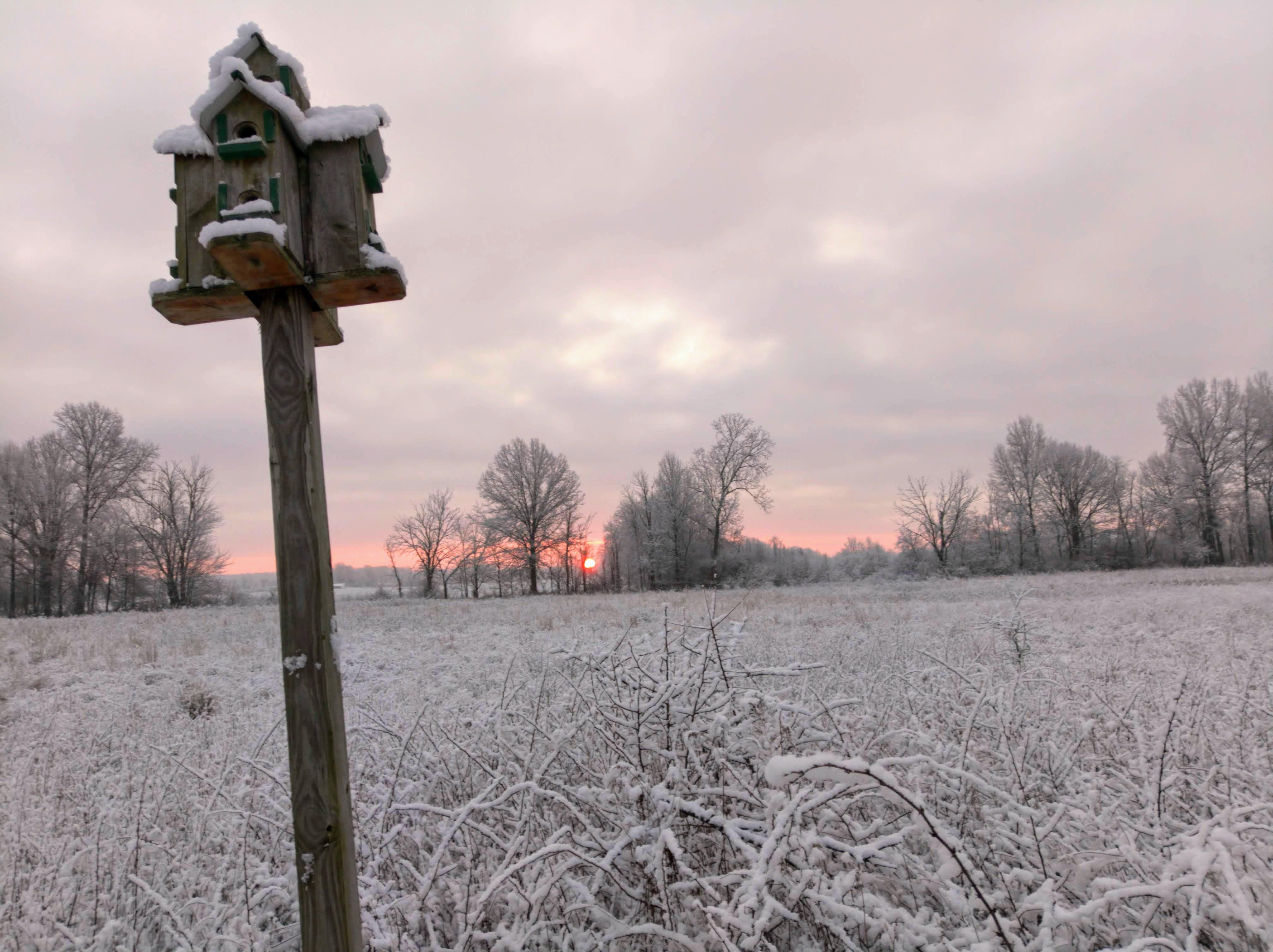 schnee, sonnenaufgang, voliere
