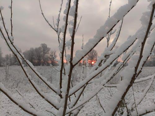 Free stock photo of snow, sunrise