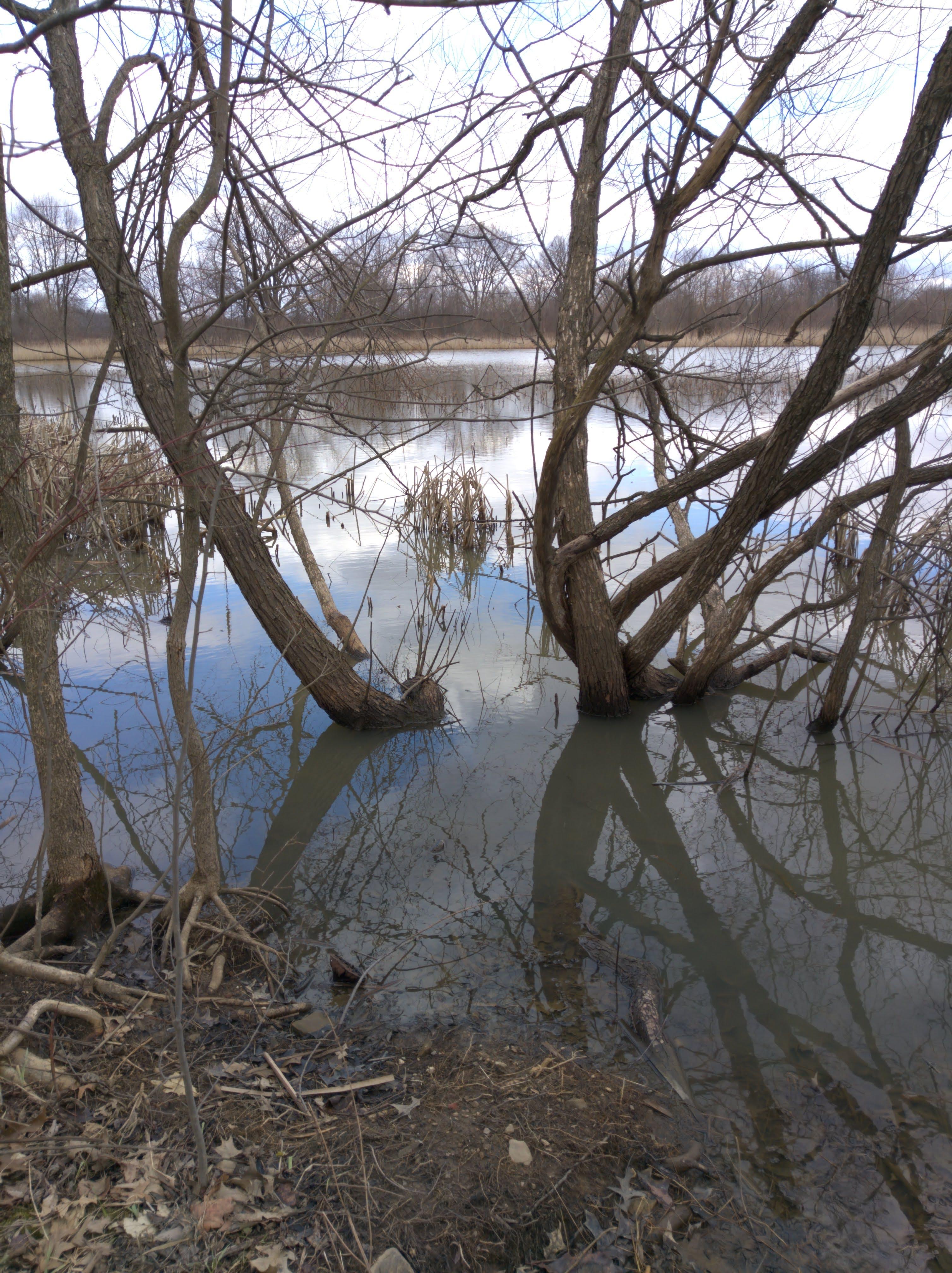 คลังภาพถ่ายฟรี ของ ต้นไม้, บ่อ, พื้นที่ชุ่มน้ำ