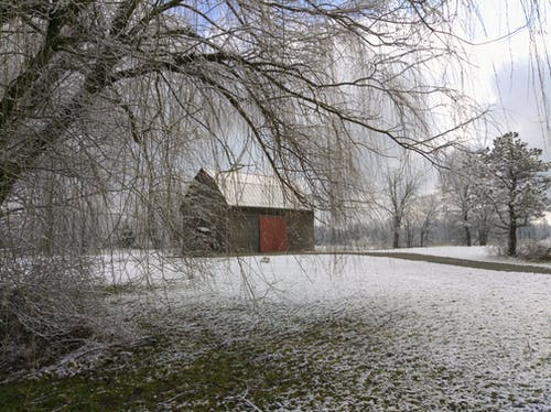 Free stock photo of barn, snow, Willow, willow trees