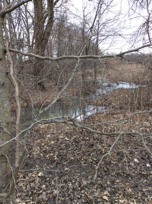 Free stock photo of springtime stream, water, wetland