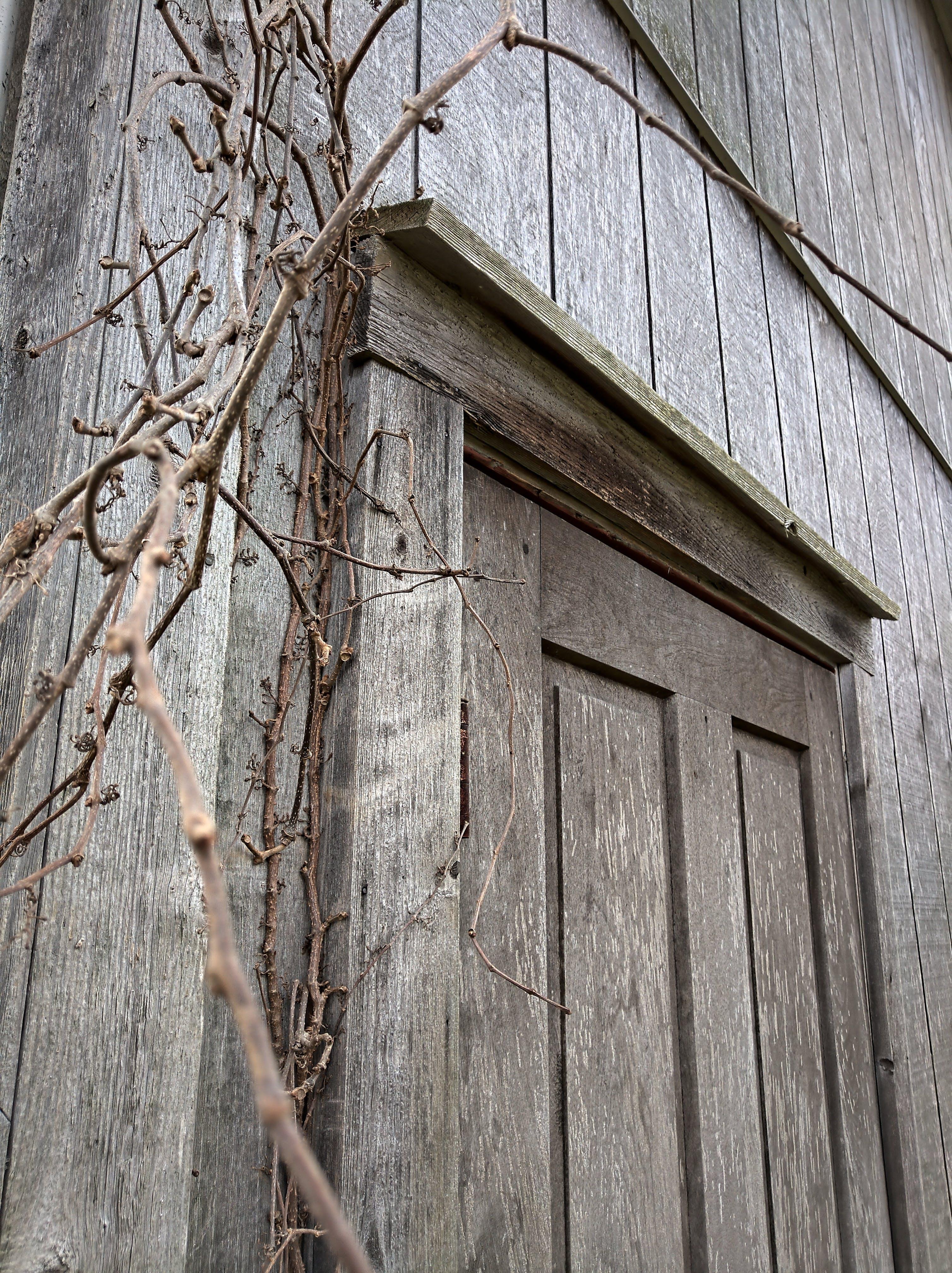 คลังภาพถ่ายฟรี ของ ประตู, ประตูเก่า, ประตูโรงนา, ไม้เลื้อย