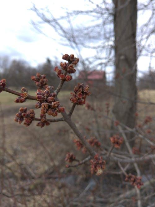 Free stock photo of barn, blossom