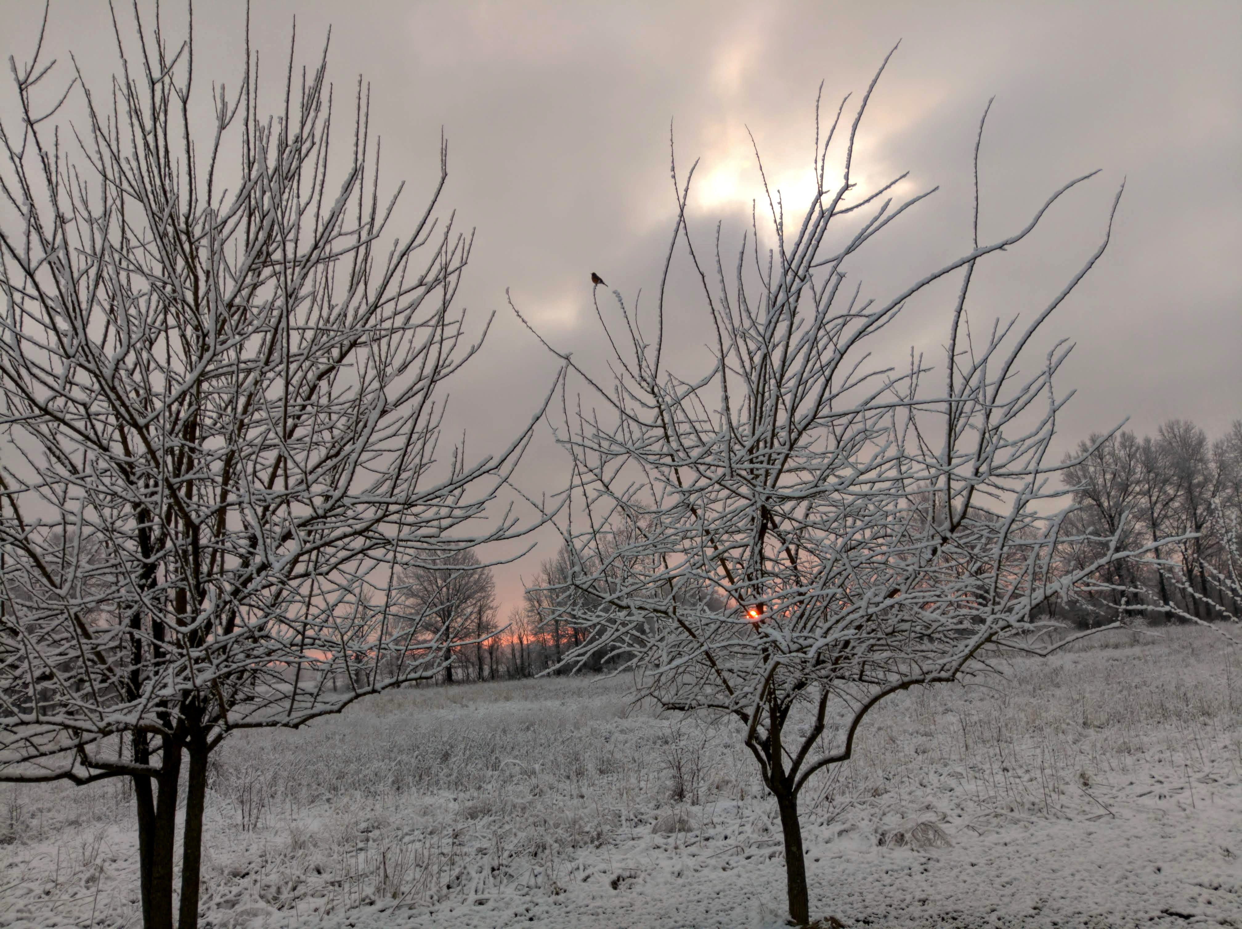 คลังภาพถ่ายฟรี ของ นกเล็กชนิดหนึ่ง, พระอาทิตย์ขึ้น, หิมะ, หิมะฤดูใบไม้ผลิ