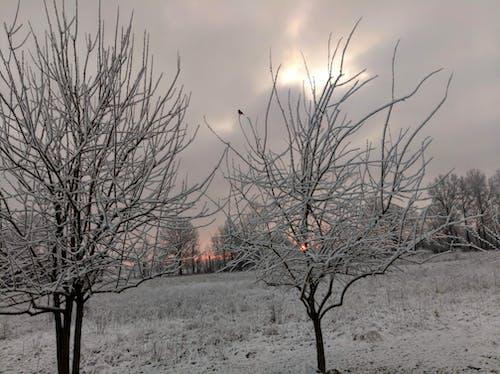 Free stock photo of robin, snow, spring snow, sunrise