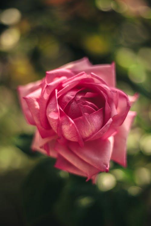 Fotos de stock gratuitas de belleza, belleza en la naturaleza, belleza natural, floración