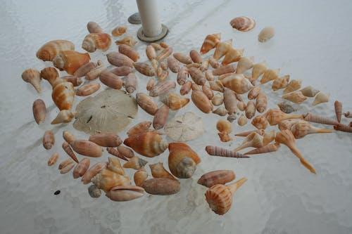 Free stock photo of beach, sea shells