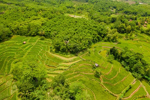 Green Rice Terraces Aerial View