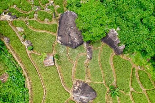 漂亮, 無人機攝影, 環境, 稻田 的 免費圖庫相片