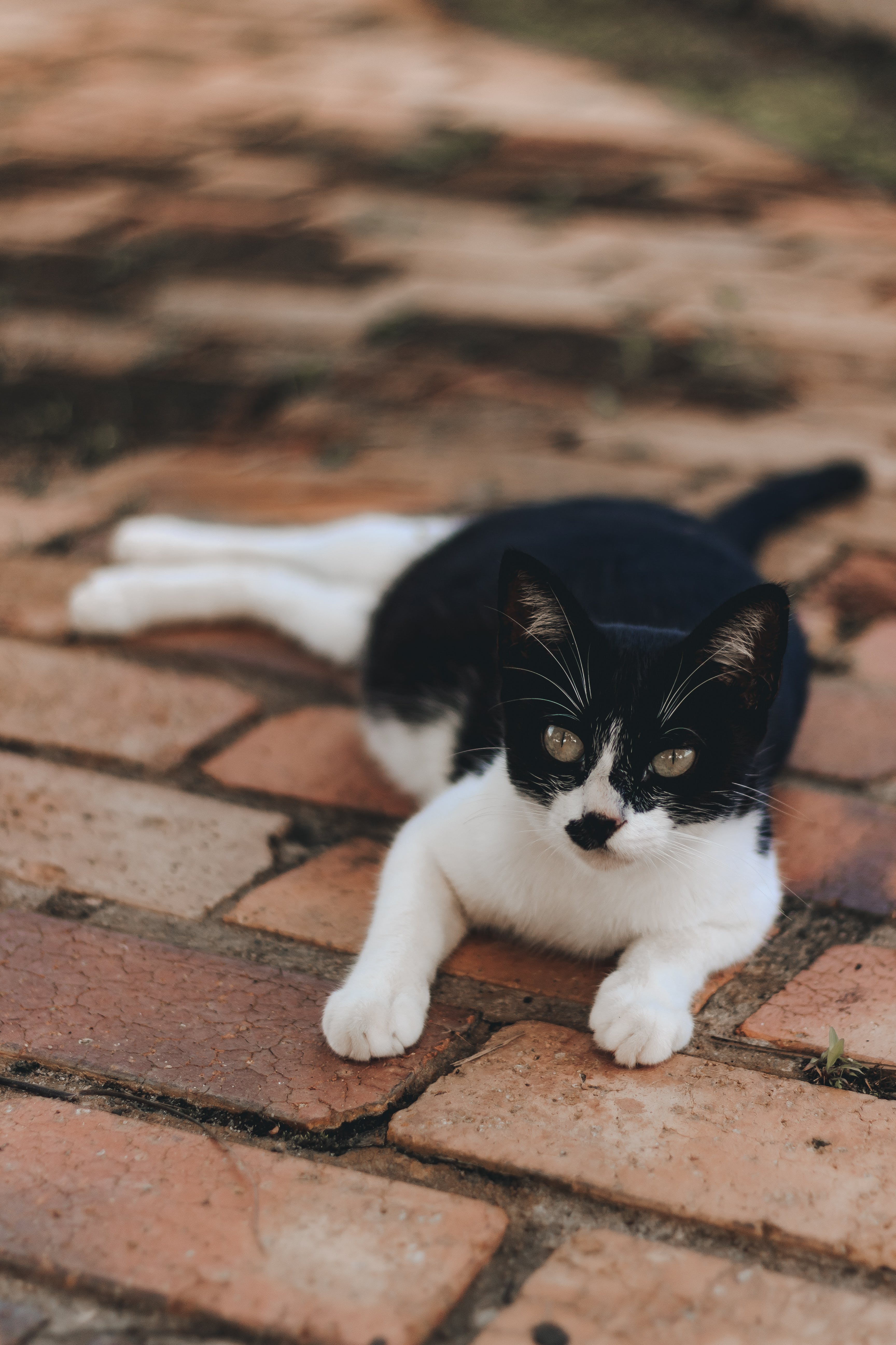 Gratis arkivbilde med bedårende, dyr, katt, kattedyr