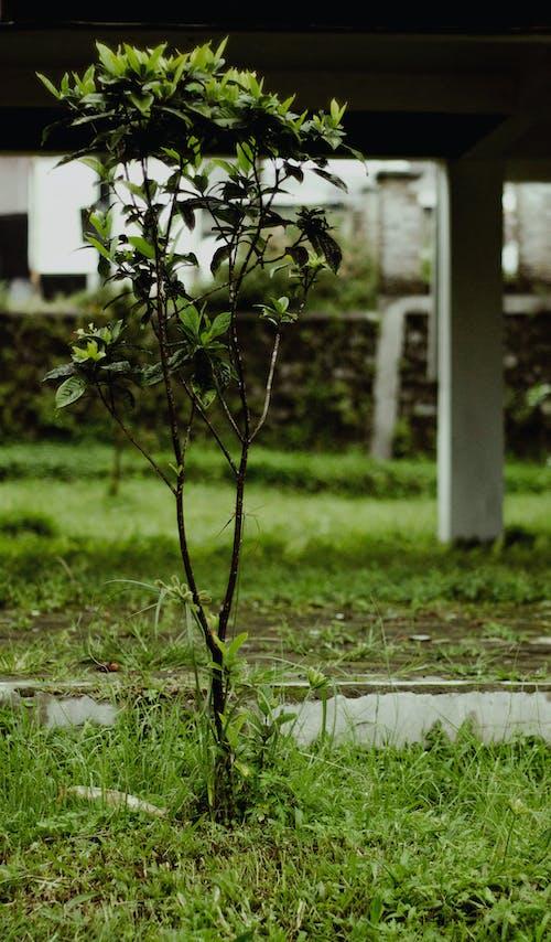 Základová fotografie zdarma na téma indonésie, strom, venkovní fotografování, zelená