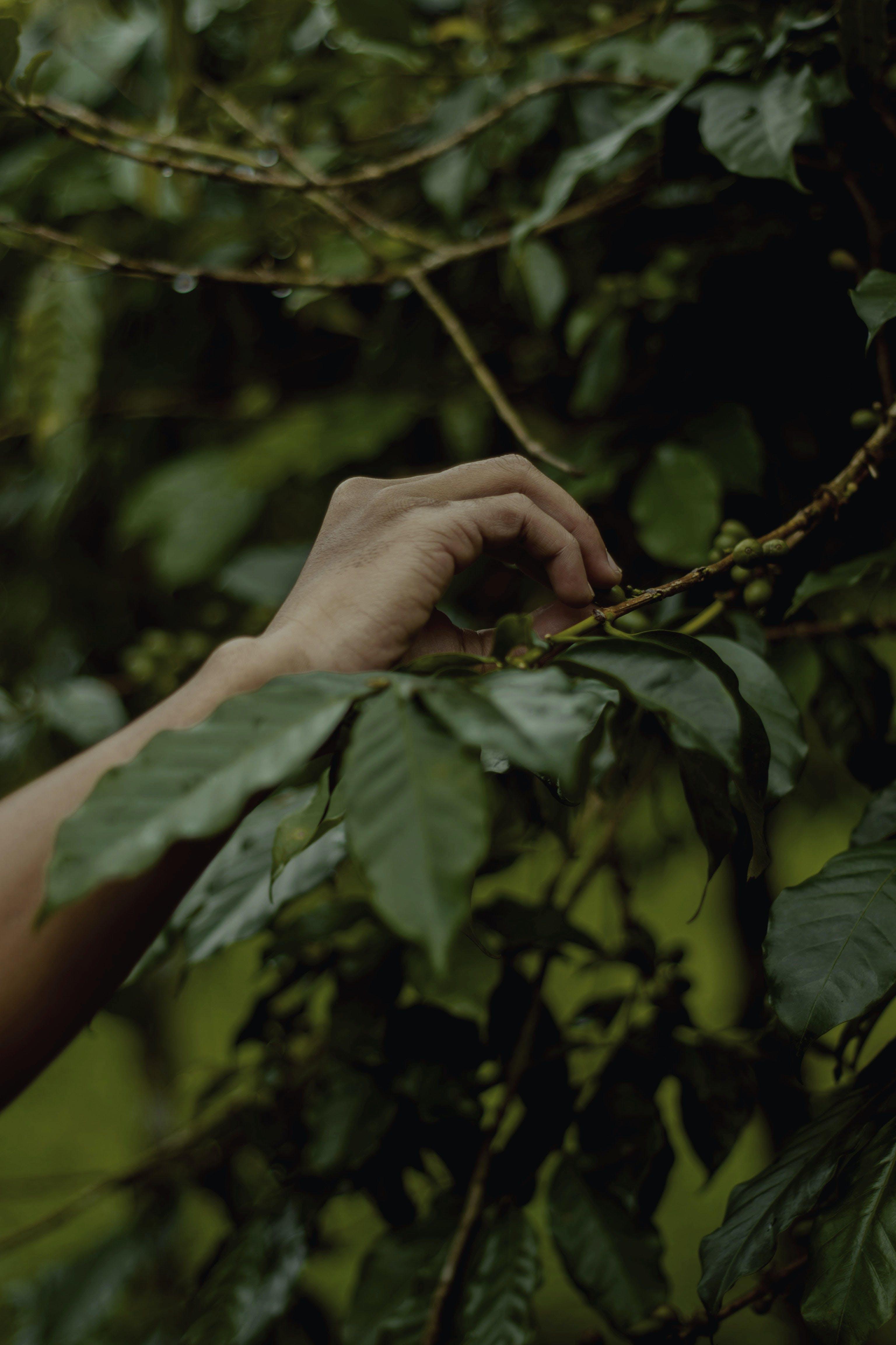 Základová fotografie zdarma na téma rostlina, ruka, větev