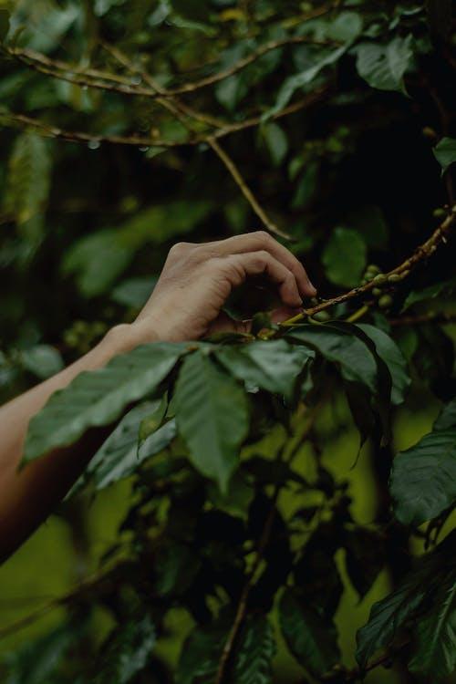 คลังภาพถ่ายฟรี ของ ก้าน, ต้นไม้, มือ