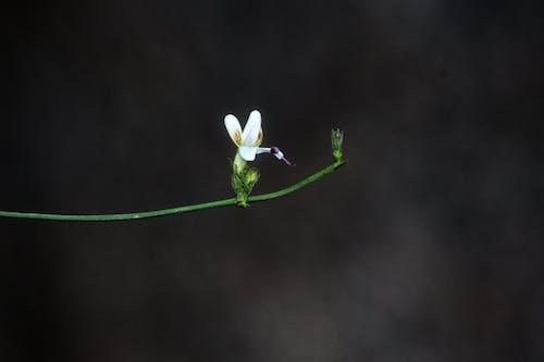 Foto d'estoc gratuïta de Apple, arbre, blanc, botànic