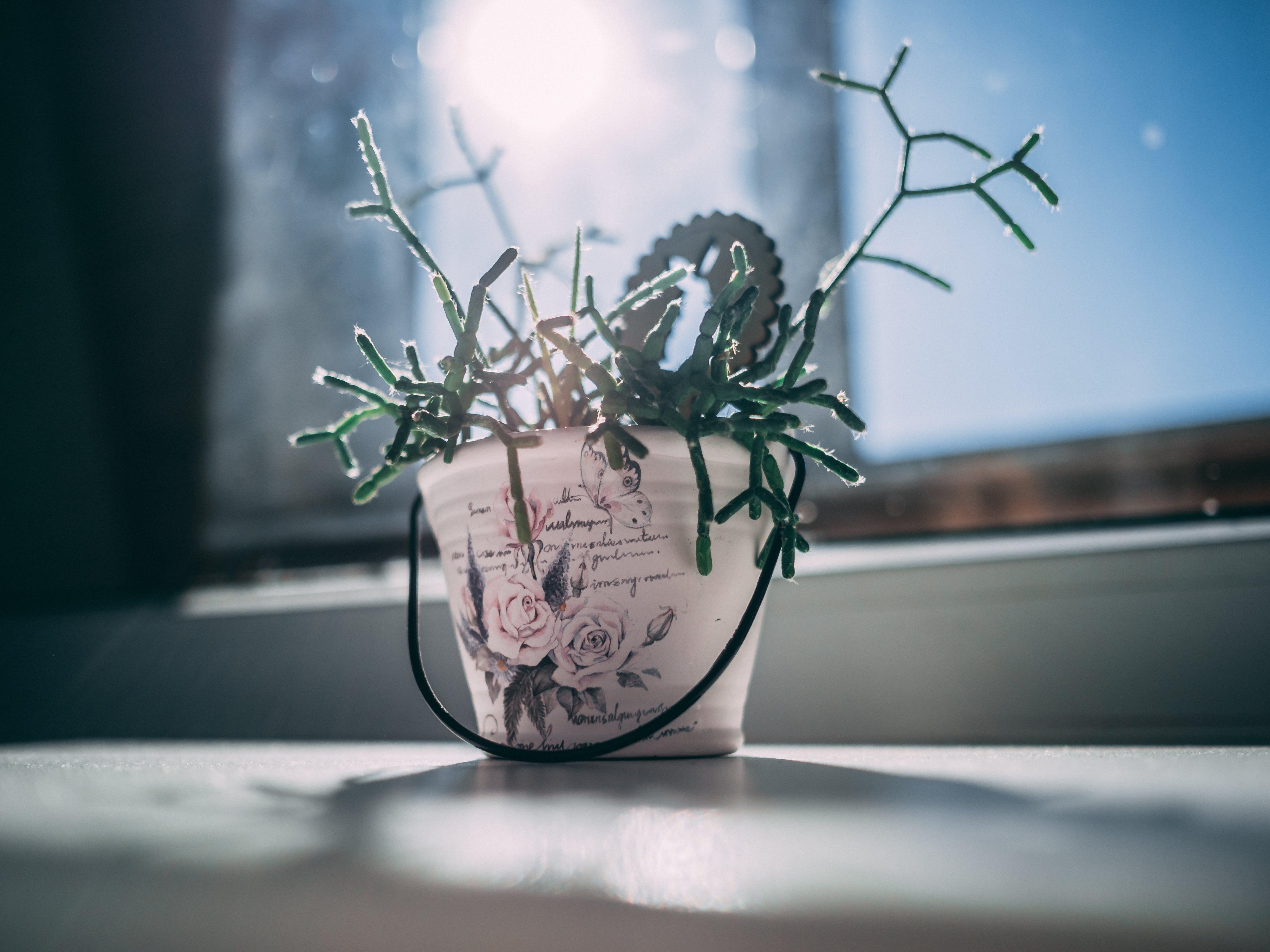 Fotobanka sbezplatnými fotkami na tému črepník, rastlina, rastlina vkvetináči