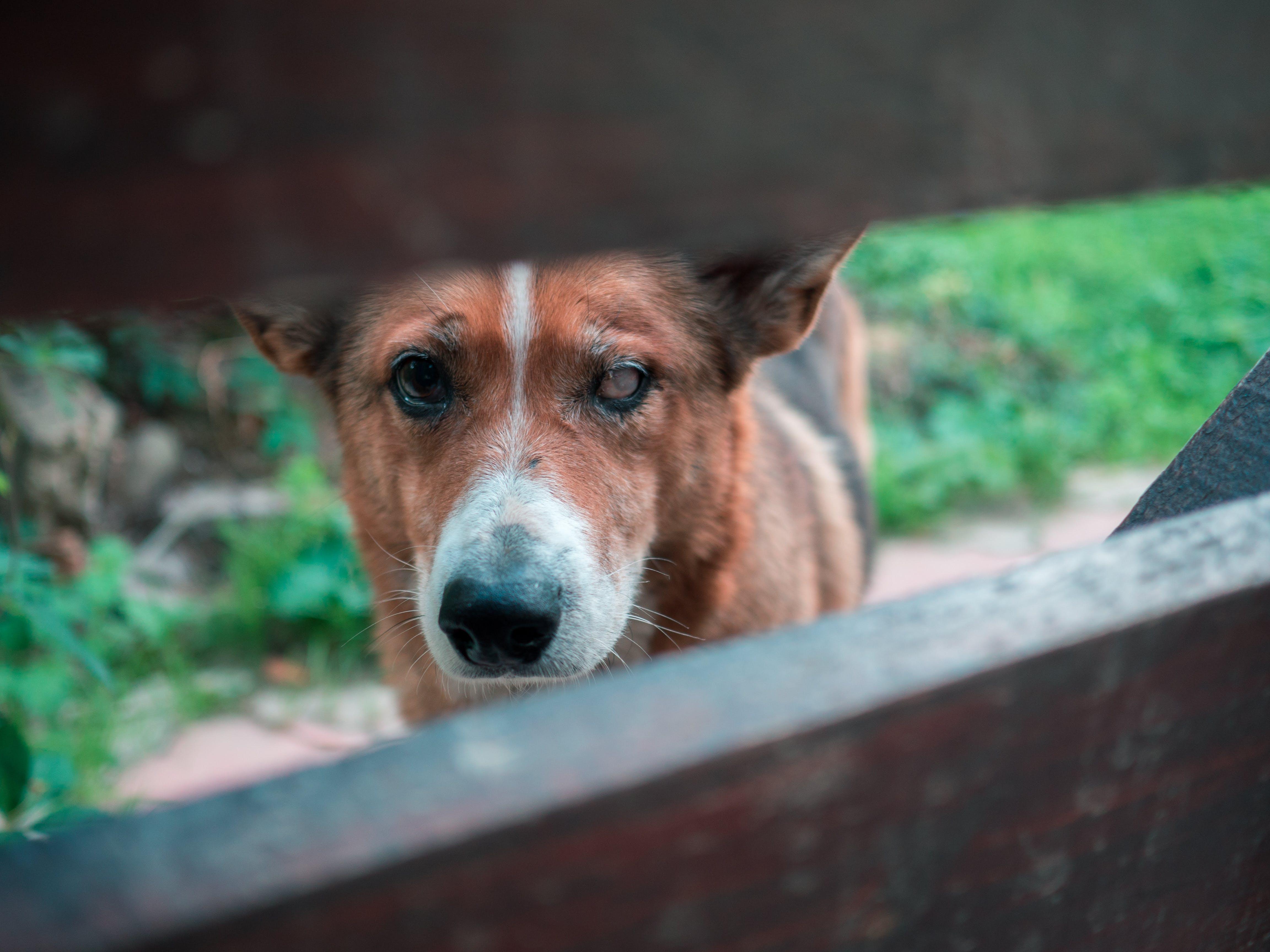 Ilmainen kuvapankkikuva tunnisteilla eläin, katsominen, koira, koiranpentu