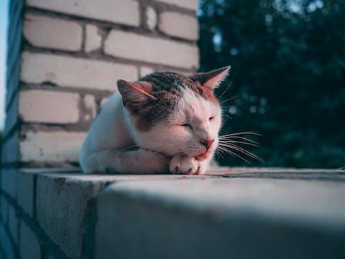 Photos gratuites de animal, animal de compagnie, animal domestique, chat