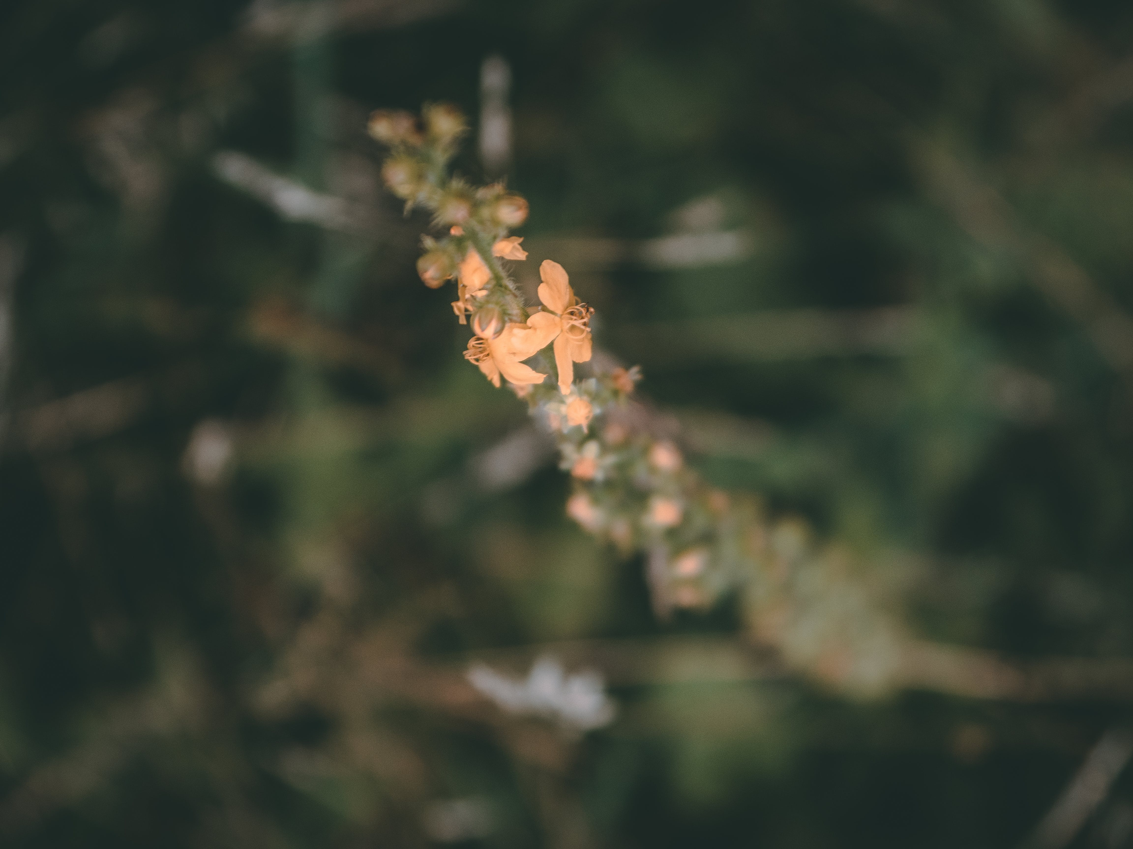 Free stock photo of bloom, blossom, blur, depth