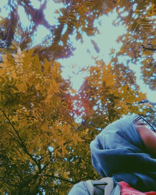 Foto d'estoc gratuïta de asus, fotògraf, fotografia, fotografia de natura